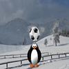 Fudbal sa pingvinima